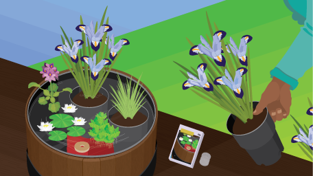 Potted Ponds:
