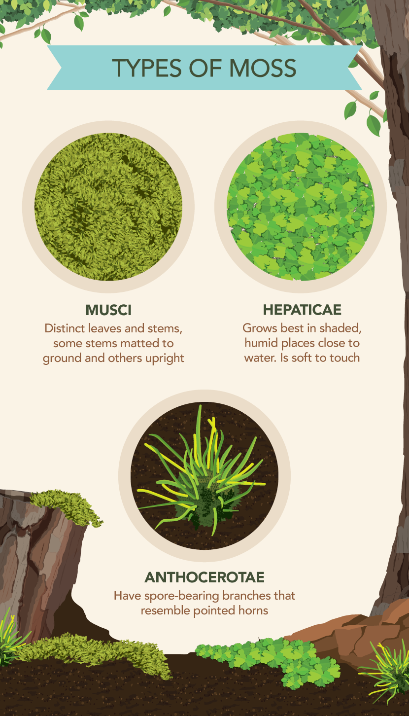 How To Grow And Care For Moss Partselect Com